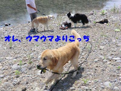 118454_2