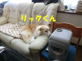 1231017